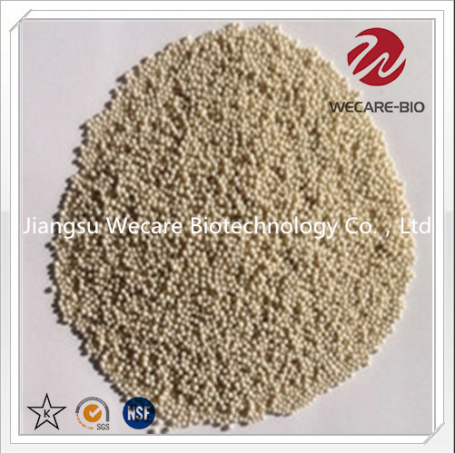 Probiotics Granule Solid Drinks Granule