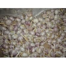 Fresh Normal White Garlic Size 5.0cm