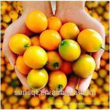 Säuglingsnahrungsmittelzusatz Kumquat Juice Powder