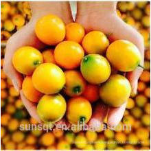 Infantal food additive Kumquat Juice Powder