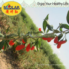Medlar Lbp BCS Certificate Organic Goji Berry