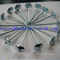 Roofing Nails with Umbrella Head/Steel Twisted Shank Roofing Nail