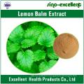 Lemon Balm Extract/Melissa Officinalis Extract