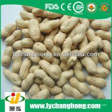 Beste Qualität Erdnuss in der Schale 30kg / bag für Verkauf mit niedrigstem Preis