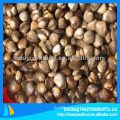 Boiled blood clam price