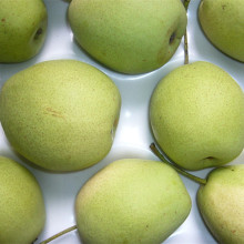 Supplying New Crop Shandong Pear