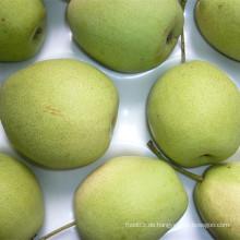 Anlieferung neuer Ernte Shandong Birne