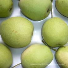 Fresh Shandong Pear Nouvelle culture à vendre