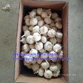 Health Food New Crop Raw Normal/Pure White Garlic