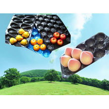 39X59cm Fresh Produce Verpackung Fach