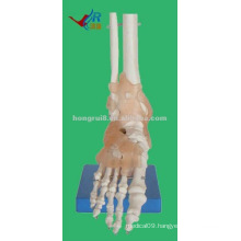 HR-113A Life-size Human Foot Model with Ligaments Model