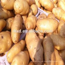 Chinesischer Süßkartoffelexport in viele Länder