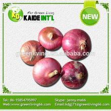 Cebola fresca de vermelho roxa com nenhum OGM