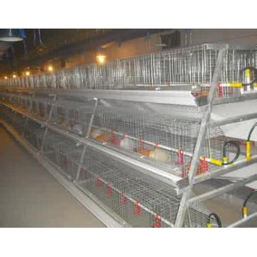 A Type Broiler Chicken Equipment
