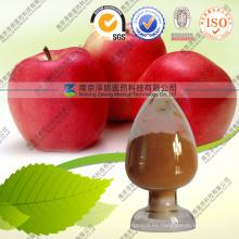 Procyanidin B2 de extracto de manzana a granel con pureza 5%