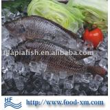 fresh frozen Nile tilapia