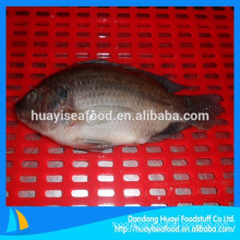 A large number of high-quality frozen tilapia selling in the market