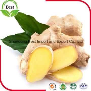2016 Yellow Good Quality Fresh Ginger