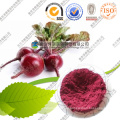 Natural Beet Root Red Pigment Powder