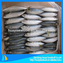 Supply Frozen Mackerel Fish With Low Price