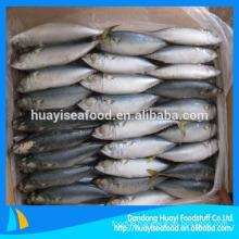 Block Pacific Mackerel Iced Fish