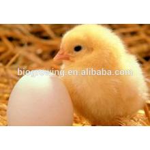 Sulfate de cuivre pour l'additif alimentaire pour volailles, Feed Grade améliore l'immunité et réduit le stress