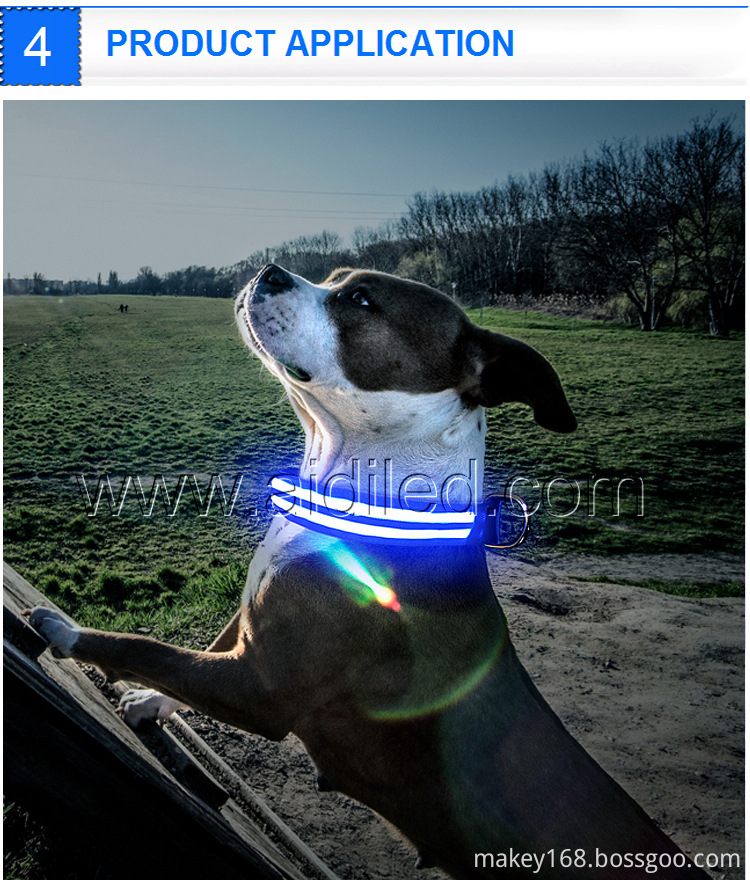 Bright Light Collar