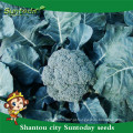 Suntoday catálogo de sementes de jardim vegetal F1 compra sementes orgânicas online heriloom sementes de brócolis (A42001)