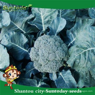 Suntoday semillas de jardín catálogo de verduras F1 comprar semillas orgánicas en línea heriloom semillas de brócoli (A42001)