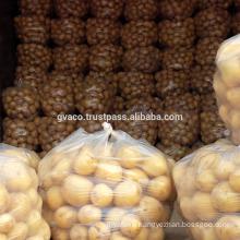 New listing yellow round fresh potato exporter top quality in Vietnam-Gvaco