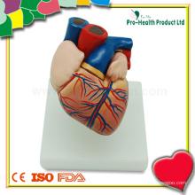 Educação Médica Modelo Anatômico do Coração Humano