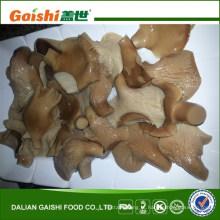 cogumelo abalone enlatado / salgado em salmoura