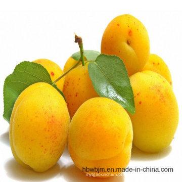 2016 Crop Apricot Puree Concentrado 30-32 Brix