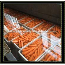 Organische rote Karotte