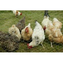 Alambre de alambre decorativo galvanizado barato al por mayor del pollo
