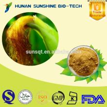 Extracto de estigma 100% de maíz natural 10% de fitosterol