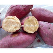 sweet potato for European markets