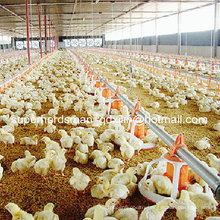 Hot Sale Poultry Farm Equipment for Chicken Farm
