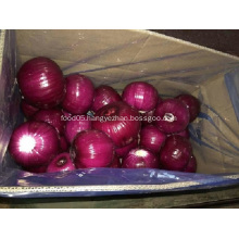 Fresh Peeled Onion with good quality