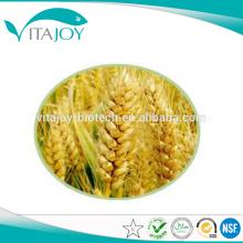 Venta al por mayor de China Suplemento dietético hidrolizado de proteína de trigo