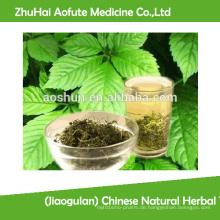 (Jiaogulan) Chinesische natürliche Kräutertee Gynostemma