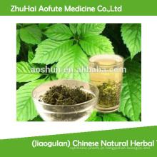 (Jiaogulan) chá de ervas naturais chinês Gynostemma