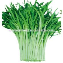 MWS02 Xiye blanc tige de haute qualité des graines d'épinards de l'eau pour la plantation