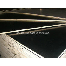 12mm Poplar Core Black Film Faced Plywoods