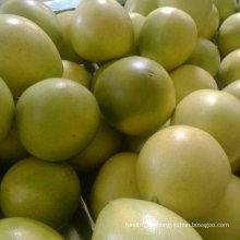 Neue Frucht Pomelo