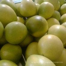 New Crop Fresh Pomelo