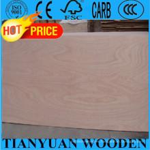 1220 * 2440mm 12mm Okoume / Bintangor / Roble / Teca / Abedul comercial de madera contrachapada