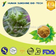 Boire de la poudre Tribulus Terrestris Extrait Tribulus Saponines pour la promotion des hormones de la glande sexuelle