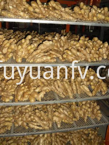 air dried ginger