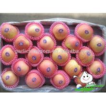 Frischer Apfel fuji Apfel Frucht